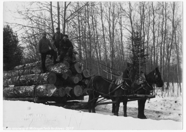 Logging 1920's, Nara woods, 3 mi. from Dreamland area
